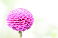 Flowers. (ost_jean) Tags: bloem fleurs special ostjean nikon d5200 90mm f28