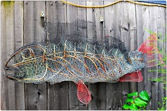 Fish by Fish the Net Becomes Full (Steve Lundqvist) Tags: fish net rete metallic fence garden backyard giardino giardinaggio gardening sweden sverige svezia stoccolma stockholm fishbone bricolage diy improvement nikon nikkor 50mm f14 doityourself carp grass koi still nature natura morta stilllife life marine sea fauna spotted spot mare art recycled recupero recycledart riciclo riciclato