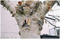 342-366 Its Bark is Worse Than Its Bite (Aged Desperado) Tags: 366 nikon nikkor nikonflickraward landscape 35mm d5000
