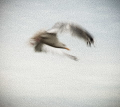 _DSC8579 (Alex Pezeshkmehr) Tags: sea motion blur birds wings long exposure flight