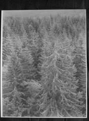 278 (Erik Höglund EH) Tags: bw analog iso400 4x5 chamonix ilford landskape kentmere chamonixcamera enlargerprint