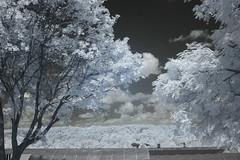 IMG_2145 (Dan Correia) Tags: granby clouds barn infrared canonef50mmf14usm 510fav wow topv111 topv333 topv555