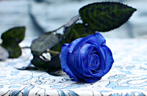 04. blue rose for a boy