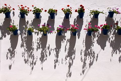 Pots On The Wall (MykReeve) Tags: shadow espaa plants plant wall spain andalucia pot pots cordoba andalusia cordova