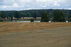Fields (Alpstedt) Tags: field landscape sweden farming fields sverige landskap sdermanland flt jordbruk sdd
