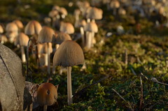 Mushrooms (On the mountain at dawn) Tags: