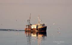 Fishing Boat Sonas OB70 (Oban) Doing Some Early Morning Fishing In The Firth Of Clyde, She Is Fishing For Prawns (Time Out Images) Tags: ayrshirecoast
