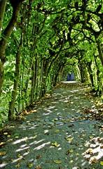 Macht Lust auf Herbst (Blick-licht) Tags: germany licht hessen autum grn schatten kassel wege lustgarten bergpark bogengang