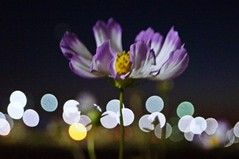 Flower & Night - Bokeh 2 (Taegil Lee) Tags: africa camera boy red people food woman baby white man black color detail tree sexy art love girl beautiful beauty leaves car rain yellow festival stone wall america work wonderful pose nude landscape creativity person star model weeds asia europe day outdoor good earth space south text leg north fine ad creative picture ground center right screen company health harmony page excellent fields series welcome cloth simple copy complex wealth advertise coth supershot pashion thatsclassy