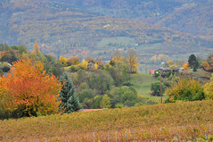 Quand j'tais jeune, l'automne tait en couleurs ! ~ When I was young, we had full of colors in autumn ! (Michele*mp) Tags: autumn trees france fall automne landscape geotagged countryside vineyard europe fa