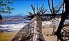 Raízes (Tony Borrach) Tags: brasil riodejaneiro mar arvore oceano morta raiz atlântico raízes itaguaí tonyborrach fujifilmfinepixs1500