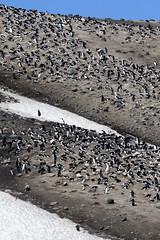 Antarctica - Day six0882 (GLRPhotography) Tags: snow ice penguin antarctica chinstrap deceptionisland 100400 baileyhead