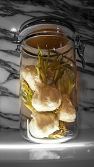 Vampire Deterent (.Andy Hall.) Tags: stilllife glass vampire taiwan clear jar garlic taipei growing crockery enclosed