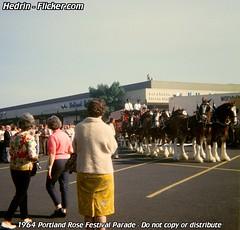 1964_Portland_Rose_Festival_44_Budweiser_Clydesdales (Hedrin) Tags: plaza dog house holland beer rose festival portland wagon parade dalmation budweiser busch eastport clydesdale anheuser newberrys