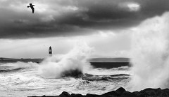 Storm 13-54 Mono [Explored] (linlaw39) Tags: winter blackandwhite lighthouse white bird nature wet water weather birds silhouette scotland blackwhite interestingness waves aberdeenshire harbour wildlife explore splash seashore stormysky stormyweather winterstorm fraserburgh seatown splashes northeastcoast lindal wildwaves highwinds galeforcewinds stormysea 2013 northeaststorm wildsea canoneos700d fraserburghharbour december2013 northerlystorm grampianuk