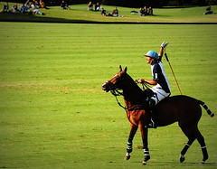 117th Hurlingham Club Open Championship, Argentina / 117 Abierto de Hurlingham YPF () Tags: vacation horse holiday latinamerica southamerica argentina argentine leather cheval nikon boots pony 70300mm polo rtw pferd vacanze tack hest roundtheworld sudamerica triplecrown  polopony amricadosul amricalatina globetrotter southernhemisphere zonasul amriquelatine polomatch  poloclub argentinien 16days  hurlingham equidae onhorseback amricadelsur sdamerika hurlinghamclub leatherboots worldtraveler  ariannin  repblicaargentina littleeurope laaguada  americadelsud chukkas argentinerepublic  argentinidad pologame poloteam ladolfina   d700 zonaa nikond700 chukkers abiertodehurlingham  triplecorona 117thhurlinghamopen hurlinghamopen  chukers tradiciondelpoloargentino