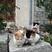 I gatti sono uguali in tutto il mondo. Come pure le persone.