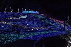 (Sagamiko Illumillion) (Paul_ (shin.ogata)) Tags: lake forest illumination gr ricoh pleasure sagami