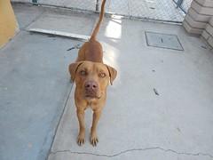 2014-01-06 Bruno (Gente por los Animales A.C.) Tags: los gente gatos perros animales cachorros por abandono maltrato asociacion protectora adopciones extraviados esterilizaciones