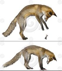 940 (Ashi Kyodai) Tags: feet animals giant foot squash paws squish crush vore microhumans