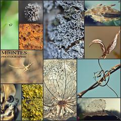 macro collage (Magikphil) Tags: suisse montage vd montes gettingcloser magicphil magikphil montesphilippe magicphilch