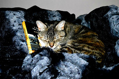Book; cat approved (Cheyenne Lundgren) Tags: cute cat reading book lucy nikon tabby lou asleep sleeeping nikond3200