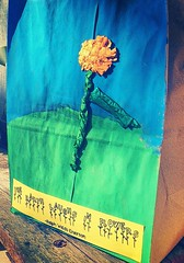 pigglywigglybag (LauraSorrells) Tags: blue flower green home yellow paper emerson bright quote vivid local synchronicity allmyrelations katoda iamprobablytheonlywomanintheworldwhowondersifapapersackfrompiggywigglyisencouraginghertotravel