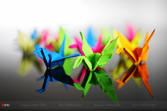 Colorful (bw.futures) Tags: plant flower colour art colors paper colorful neon colours foto bright bokeh depthoffield vietnam cranes colourful saigon canoneos catchy papercranes photoborder colourartaward artlegacy bwfutures neonfoto