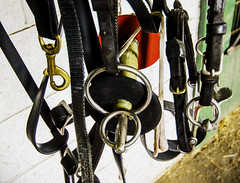 Horse Gear (Daveyal_photostream) Tags: texture beautiful beauty photoshop nikon raw circles details belts equipment shopped brass bit straps buckles horsegear d600 nikor awesomeshots bridel mycamerabag horserig mygearandme meandmygear