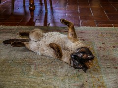"Pablo having a roll • <a style=""font-size:0.8em;"" href=""http://www.flickr.com/photos/91306238@N04/14389418057/"" target=""_blank"">View on Flickr</a>"