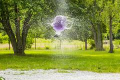 Exploding plumb (adamopal) Tags: water canon balloon pop impact 5d canon5d dart waterballoon popping canon5dmarkiii darkgun
