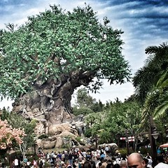 Tree of life #familyouting #jestergraphix #familytime #disney #treeoflife #family #florida #disneycruise2016 #color (jestergraphix) Tags: ifttt instagram tree life familyouting jestergraphix familytime disney treeoflife family florida disneycruise2016 color