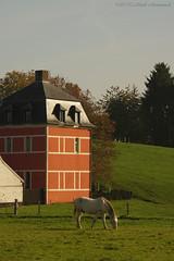 Tervuren.Belgium (Natali Antonovich) Tags: tervuren belgium belgique belgie nature landscape horse animal architecture style