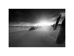 Spurn (Furious Zeppelin) Tags: ©furiouszeppelin ©fz black white bw nikon d80 spurn east yorkshire coast beach sand groynes sun