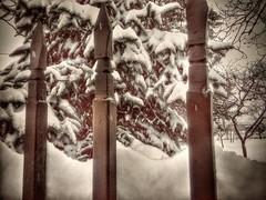 12552426_156266751412927_1607982563_n (dragica_basaric) Tags: winter snow wonderland magic magical snowy flake nature green colours streets treet postcar postcards love train phot january 03 2016 photo photography d b danchy92 dragicabasaric lapovo serbia srbija srb sumadija dbphotography