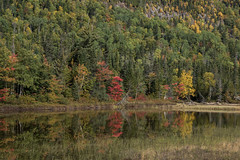 Last Fall (Aymeric Gouin) Tags: canada northamerica qubec petitsaguenay fall automne autumn water eau reflection reflet mirror miroir red green yellow nature landscape paysage paisaje landschaft foliage saguenay olympus omd em10 travel voyage aymgo aymericgouin