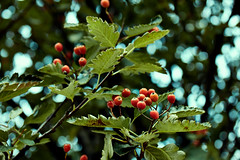wallpaper (johnny.cvetkovic) Tags: nature plant tree colorful bokeh depthoffield portrait green canon eos life earth