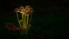 . (Profiamateur) Tags: mushroom nature wood pilze light green sony