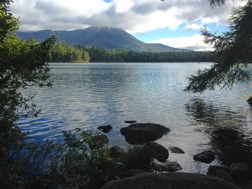 Daicey Pond - www.amazingfishametric.com