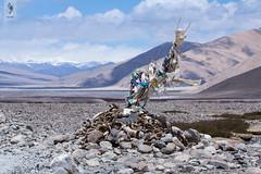 IMG_0425 (Archna Singh Photography and Design Studio) Tags: canon ladakh zanskar jammukashmir khardungla rohtang tsokar india nature tropicaldesert buddhism