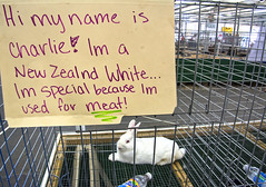 WHEN BEING SPECIAL MAY NOT BE BENEFICIAL (akahawkeyefan) Tags: rabbit meat fair fresno davemeyer cage sign