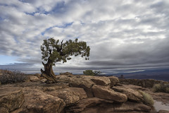 after the storm (Arniesra) Tags: utah canyonlands deadhorse hdr pentaxk3 sonya6000 landscapes canyoncountry