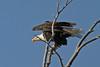Waterton Lakes National P - Weißkopfseeadlerark (astroaxel) Tags: kanada alberta waterton lakes national park weiskopfseeadler adler seeadler