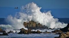 Dashing and Crashing (Michael T. Morales) Tags: ptpinos rockformation pelicans pacificgrove montereybay