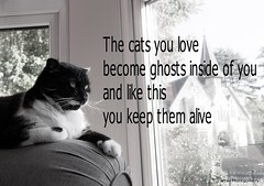 The cats you love - Tom the rascal (Brother G) Tags: cat cats art picture black white robert montogmery people you love become ghosts inside like this keep them alive tom rascal