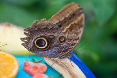 Schmetterling (michimulder83) Tags: ega egapark erfurt schmetterling butterfly tokina 100 100mm macro