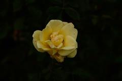 JJN_2972 (James J. Novotny) Tags: chicago conservatory botanical gardens garden flowers flower nikon d750 path paths skokie lagoons