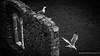 miriam-rossignoli-local-photographer-cinque-terre-sea-mediterraneo-portovenere-2016 (Miriam Rossignoli) Tags: cinqueterre laspezia lerici miriamrossignolicopyright palmaria portovenere tellaro thegulfofpoets tino local photo photography