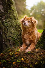 Lucy (dinahlorraine) Tags: dog pet hund haustier animal tier laub leaves wald forest trees herbst autumn