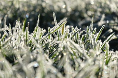 May the winter warm your soul (Goruna) Tags: winter frost grass gras bokeh shiny bright goruna cold